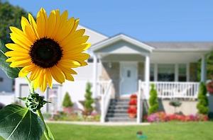 Sonnenblume_klein